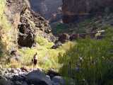 Masca,trek,Tenerife,Kan�rsk� ostrovy,Canary Islands